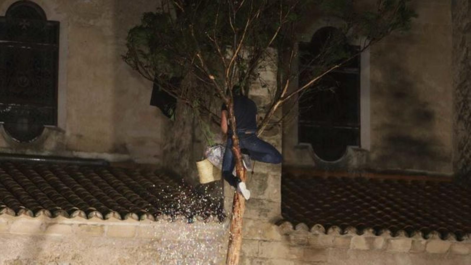 Samuel Rosende corona el pi de Pollença i tanca les festes de Sant Antoni