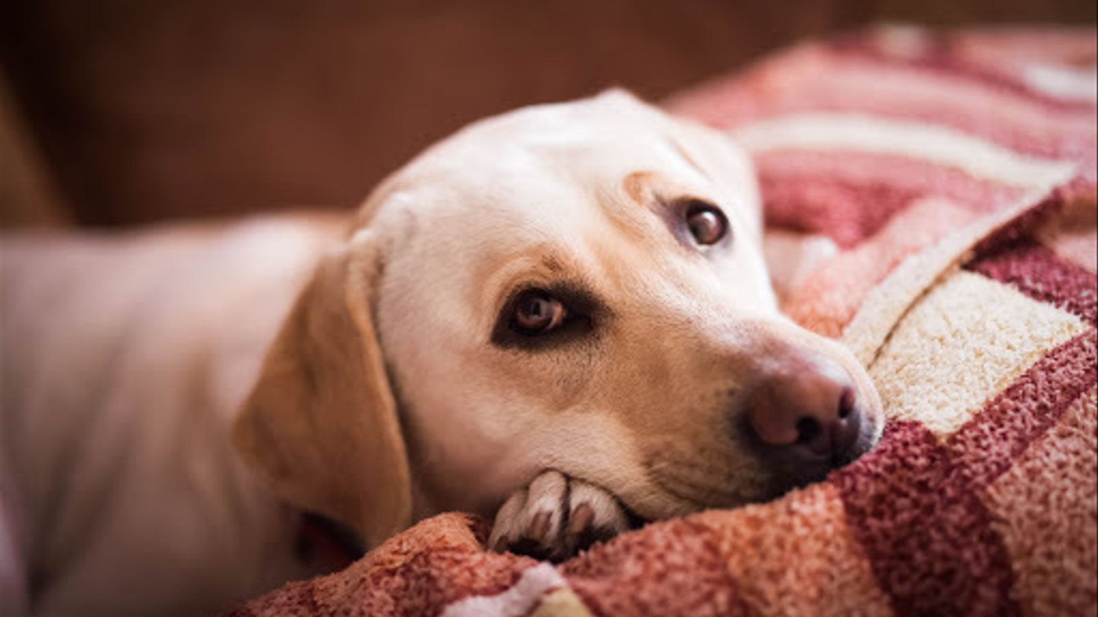 Imatge d'arxiu d'un gos