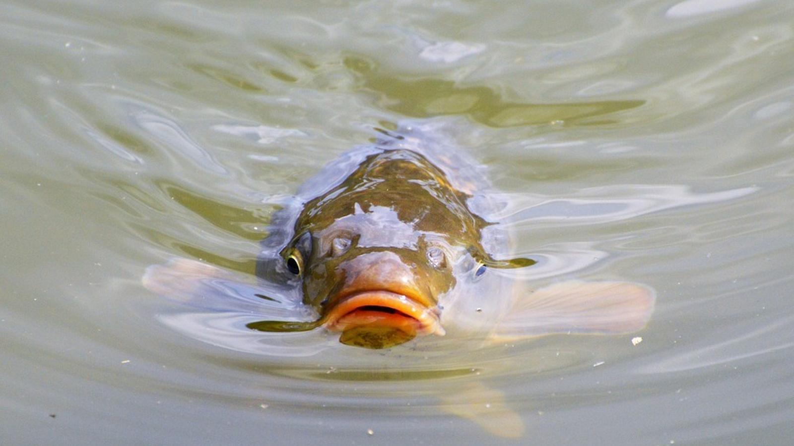 10 de les espècies invasores més nocives per a la biodiversitat