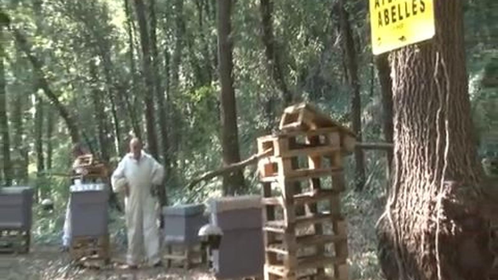 Apicultors de la Garrotxa lluitant contra la vespa asiàtica