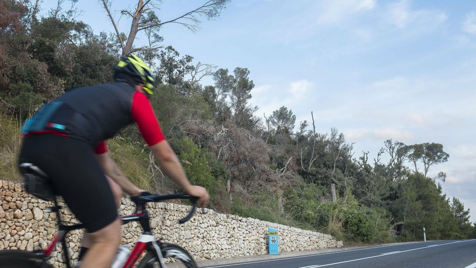 Més de 7.000 arbres caiguts augmenten el risc d'incendi a Menorca