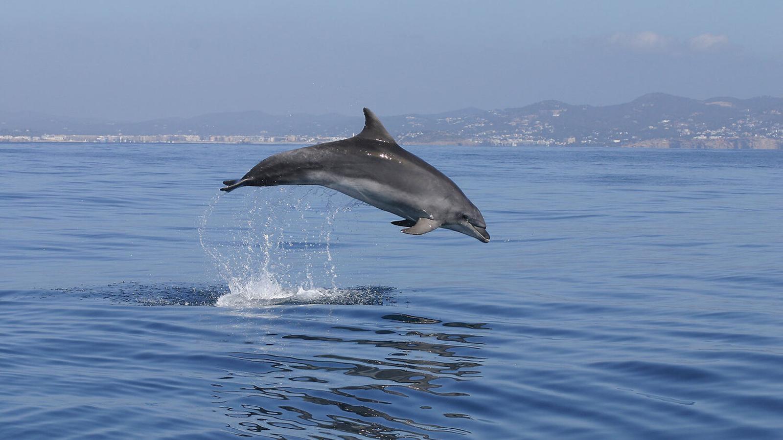 De l'estudi s'ha conclòs la presència de cinc espècies diferents de dofí.