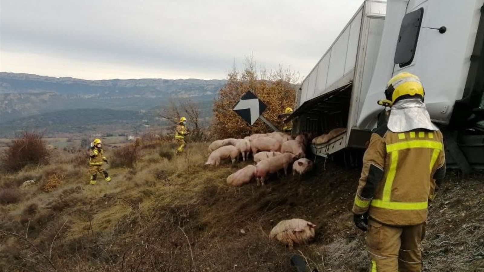Un camió carregat amb 240 garrins bolca prop del port de Comiols. / BOMBERS
