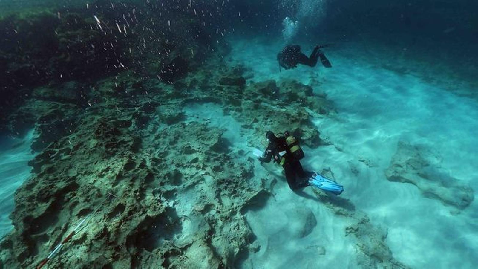 El  fons marí de Formentera. / J.R.P