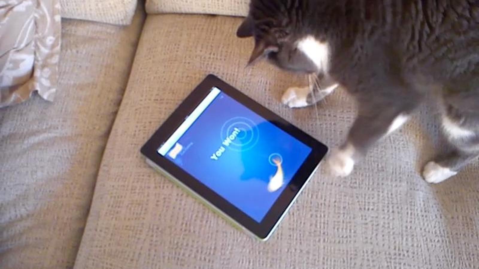 Videojocs per a gats (I)