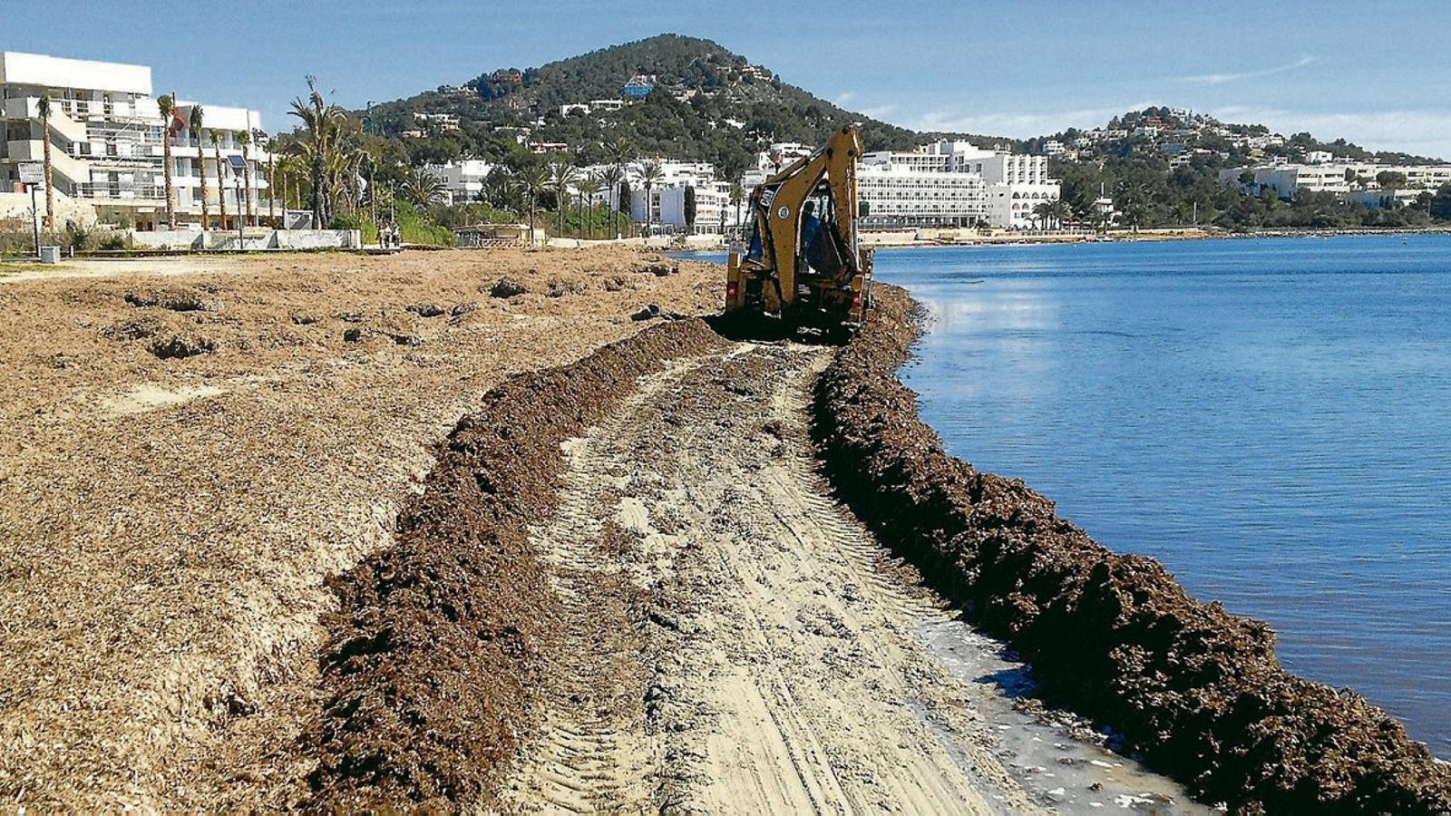 La retirada de posidònia fa perdre 27.000 tones d'arena en vuit anys