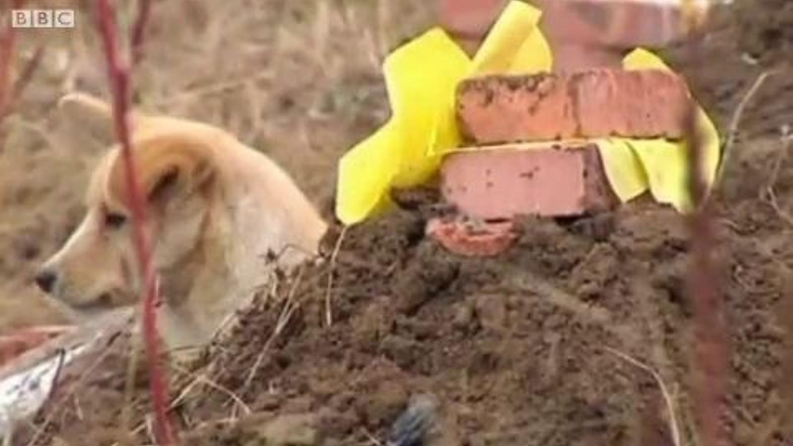 Un gos refusa abandonar la tomba del seu amo a la Xina