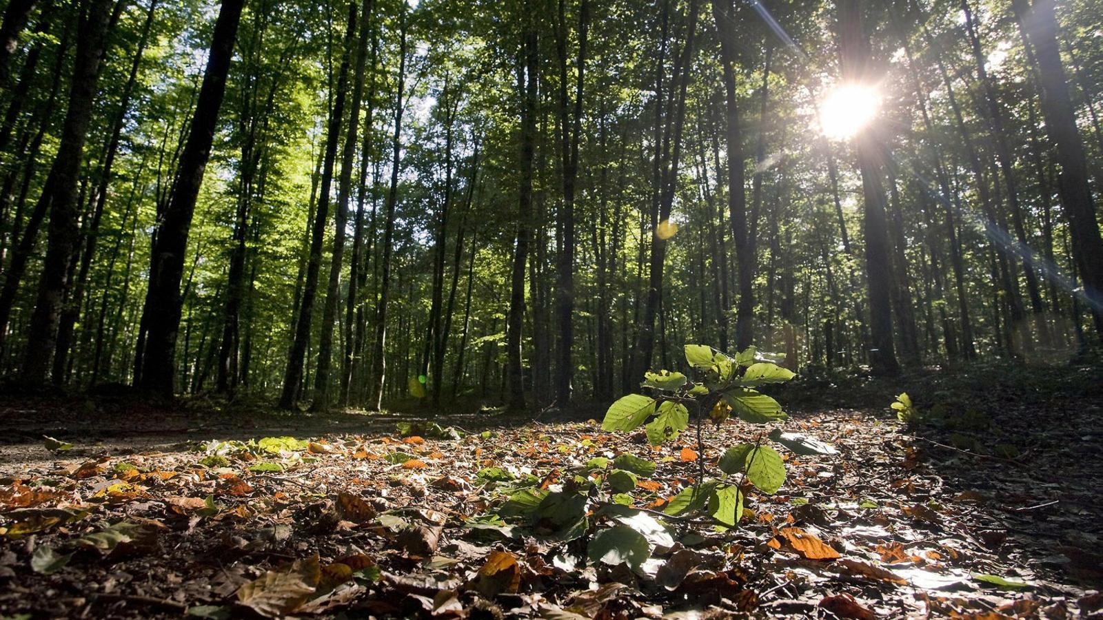 Girona té els boscos més vulnerables a la sequera