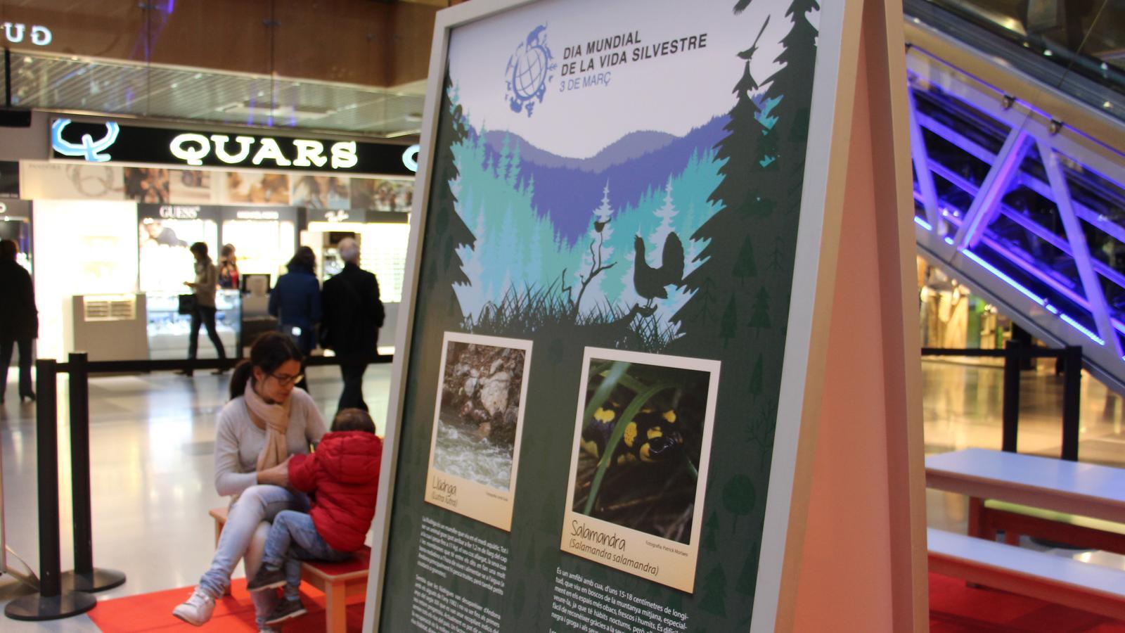 Andorra celebra per primera vegada el dia mundial de la - Centre comercial la illa ...