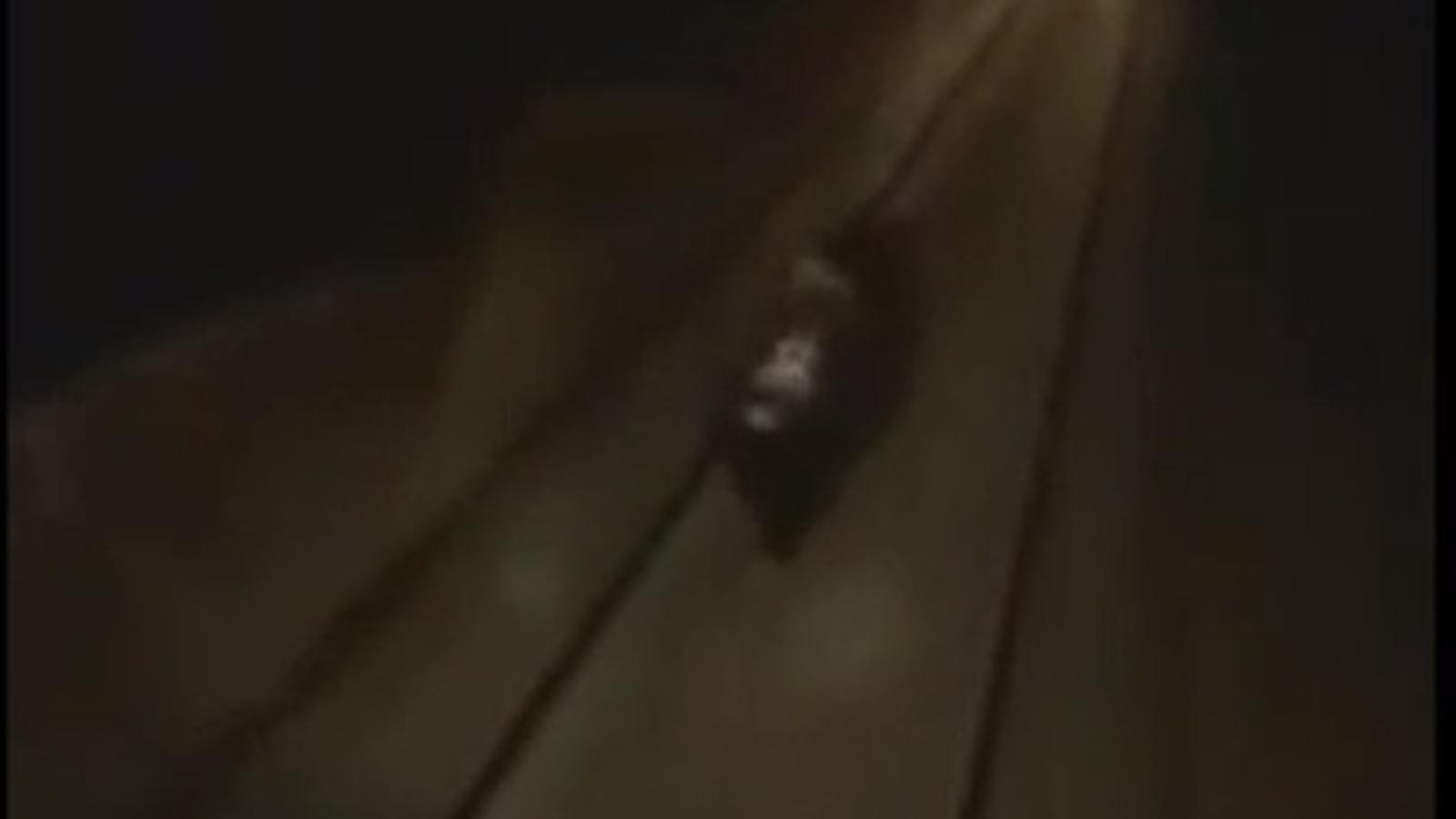 El conductor d'un tren rus atropella un ós per divertir-se