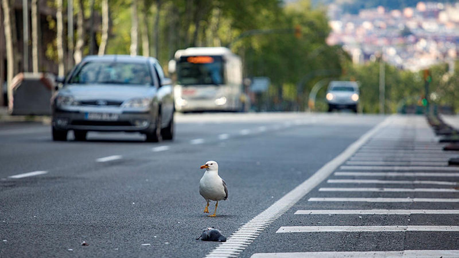 El BOE publica les mesures de la desescalada en matèria de mobilitat