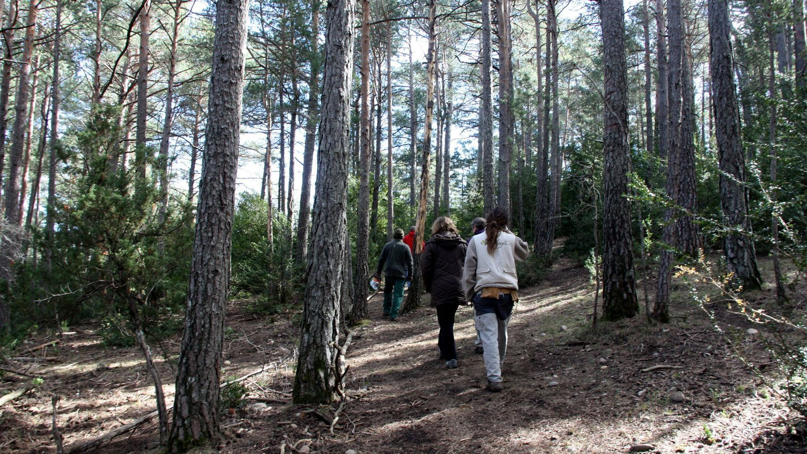 Prendre un bany de bosc: la medicina forestal s'estén per Catalunya