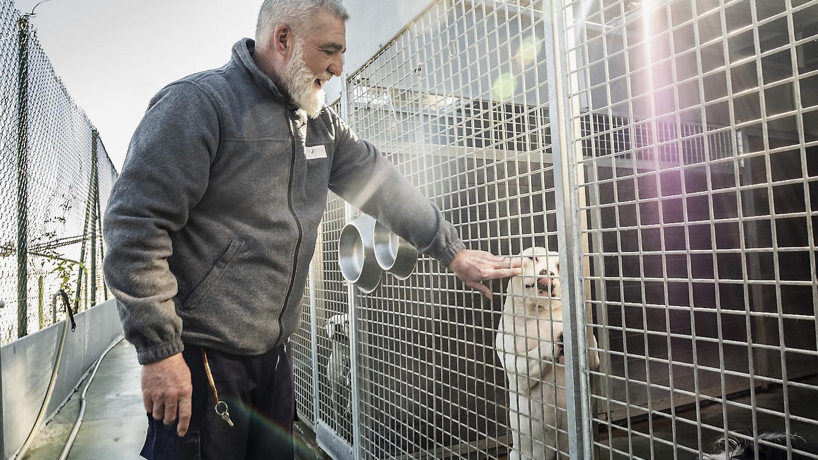 Les instal·lacions del Centre d'Acollida d'Animals de Companyia de Barcelona (CAACB) han quedat petites i antigues per poder acollir tots els animals abandonats.