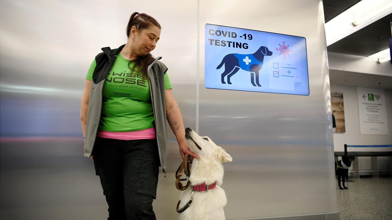 Gossos per detectar el covid-19 a l'aeroport de Helsinki.