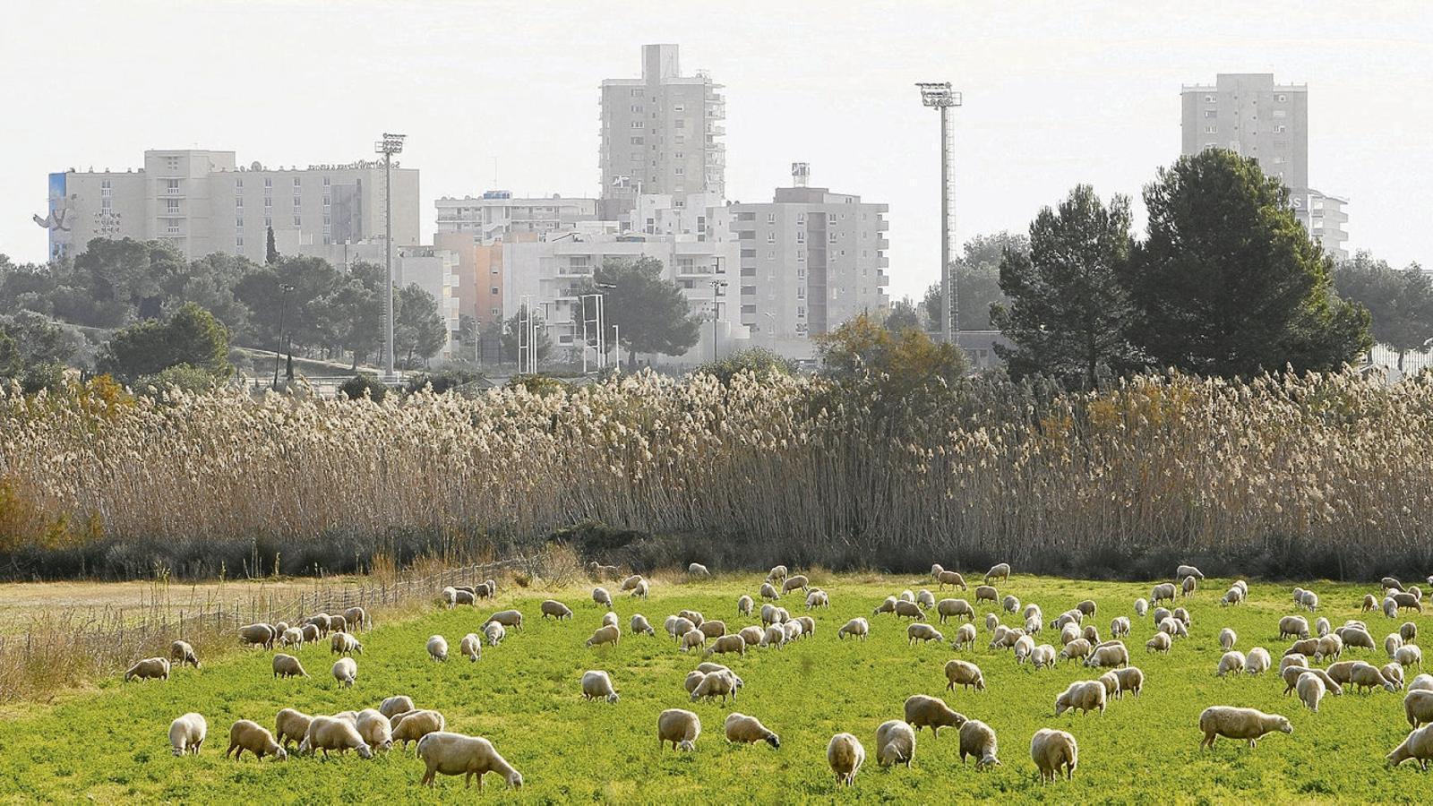 Reviure el camp, una solució per frenar la destrucció del paisatge