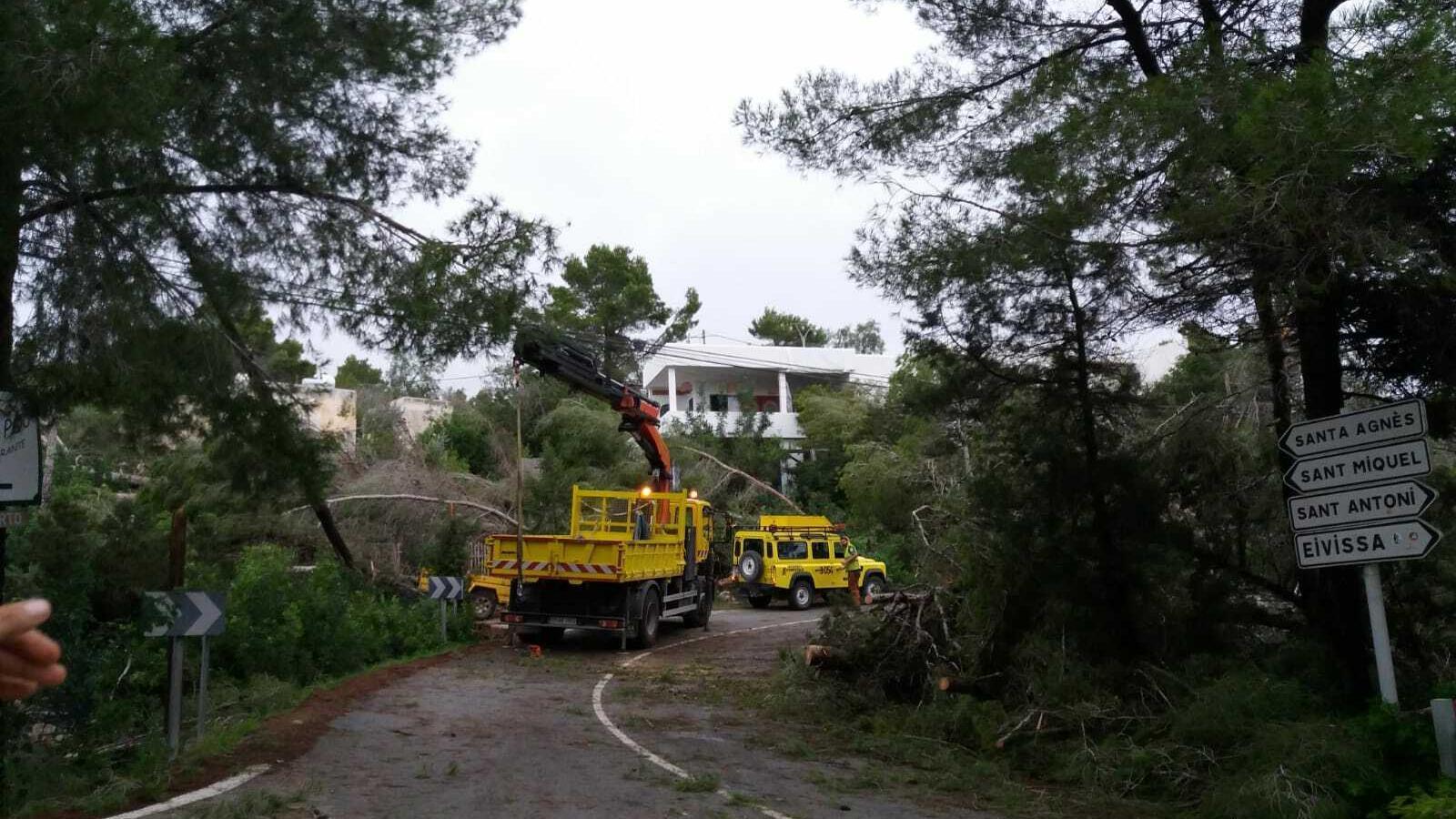 """El temporal deixa """"milers d'arbres devastats"""" a Eivissa"""