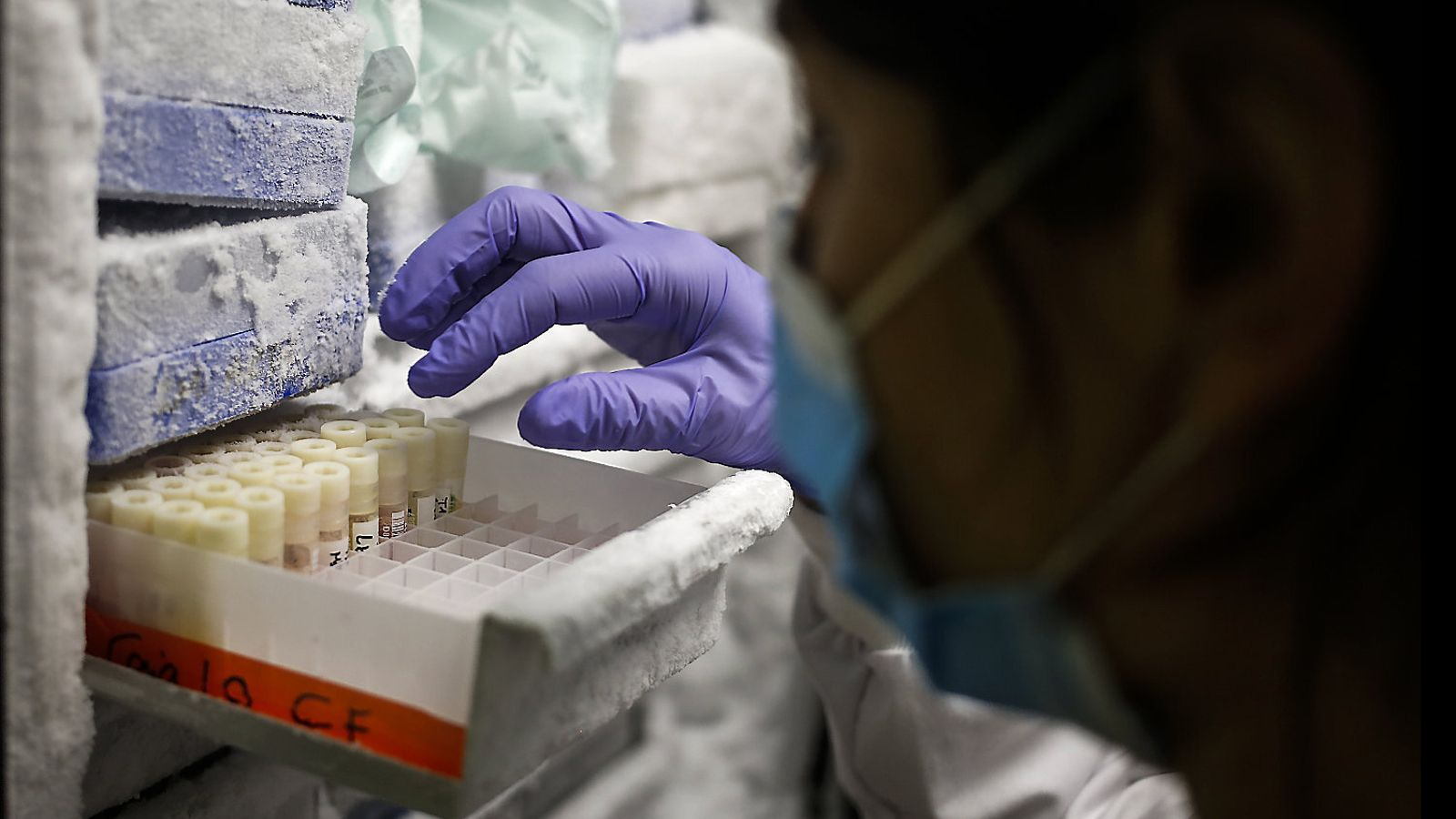 Un prototip de vacuna protegeix Micos del coronavirus