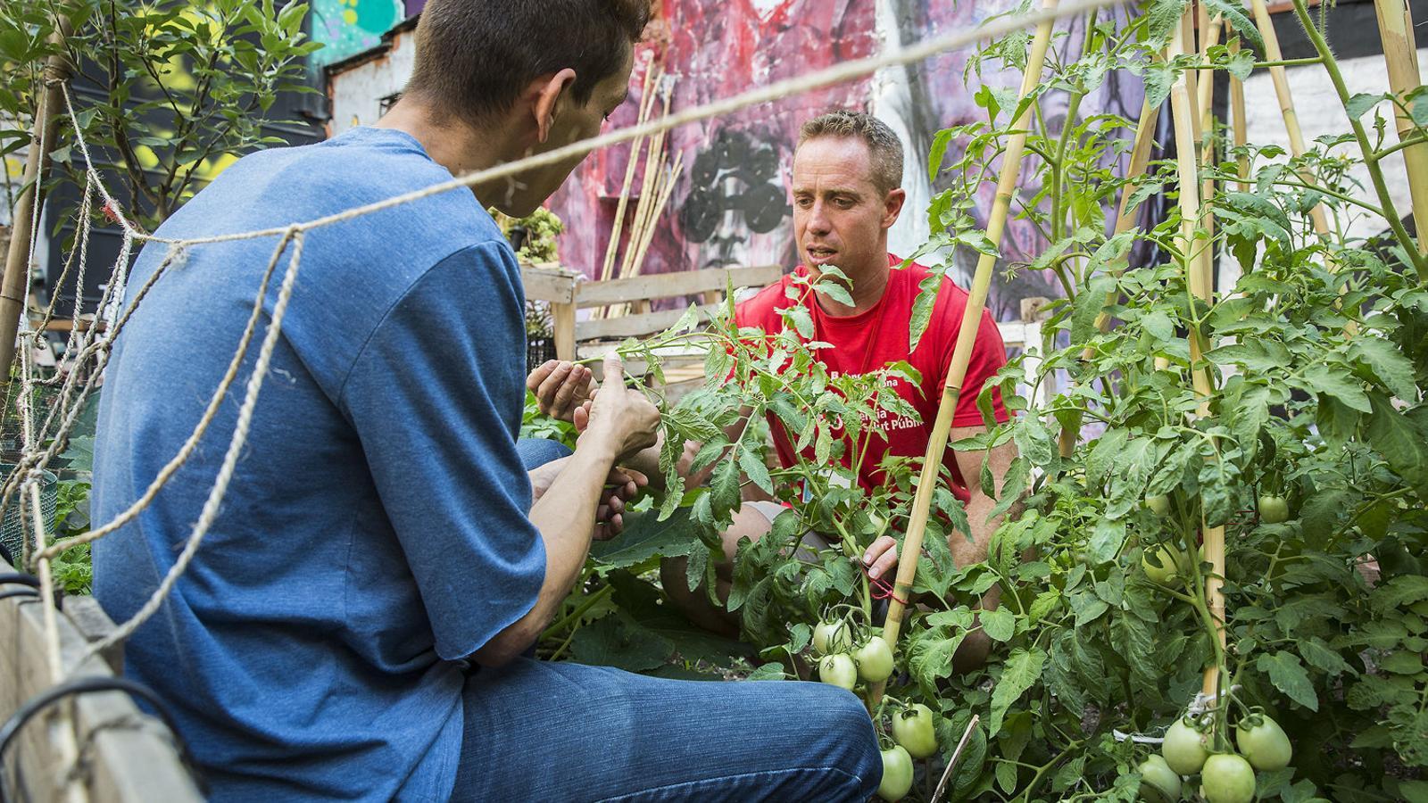 Jardineria per desconnectar de les drogues