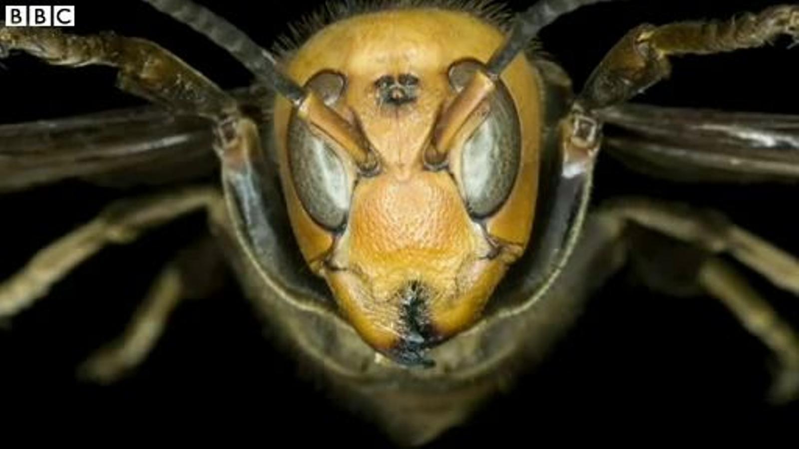 42 morts i 1.600 ferits a la Xina per atacs de vespes