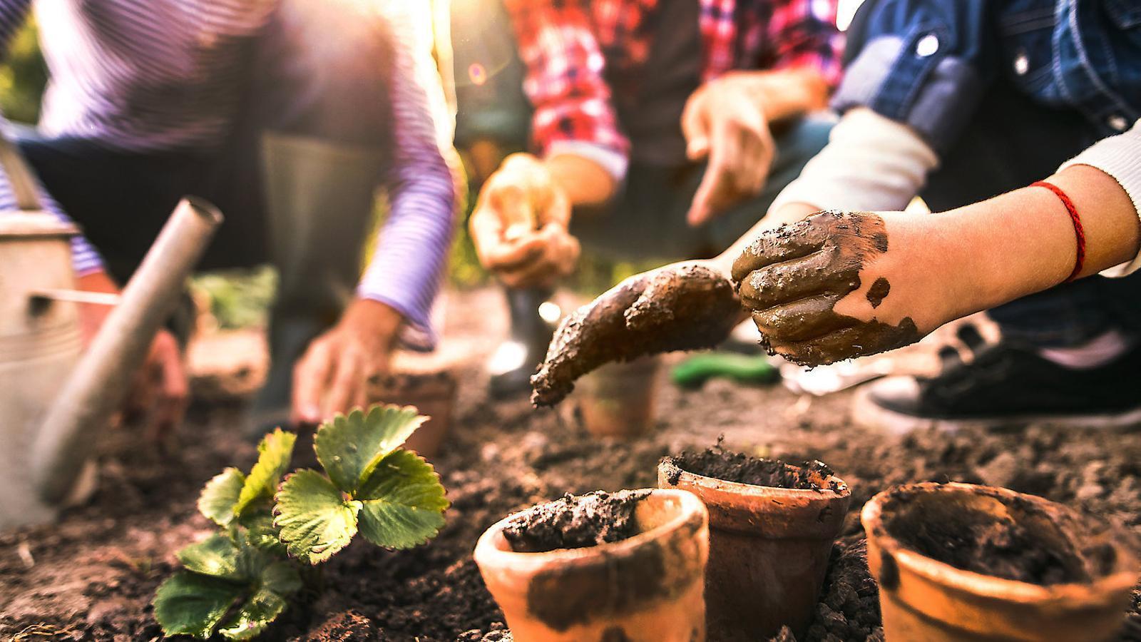 El consell La jardinoteràpia s'ha utilitzat en programes de rehabilitació, entrenaments ocupacionals, clíniques psiquiàtriques i mentals, hospitals, presons i escoles.