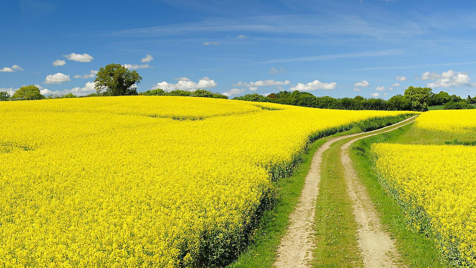 Coses que les flors ens diuen sobre el territori