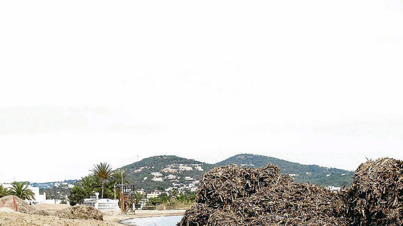 Les gestió de les fulles de posidònia caigudes és imprescindible per garantir el manteniment de l'arena de les platges.