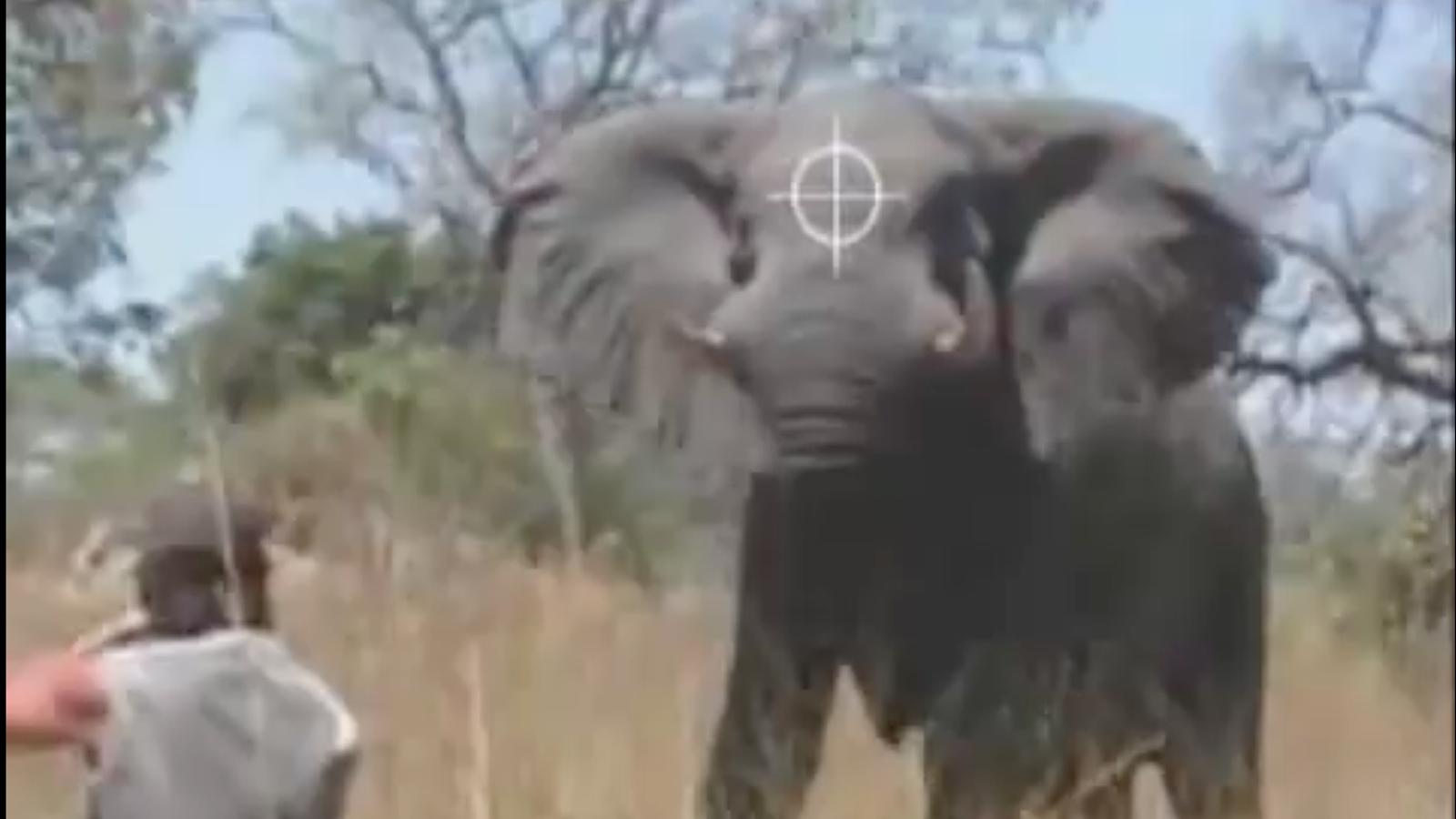 Anunci promocional de Rann Safaris en què mostren com es mata un elefant