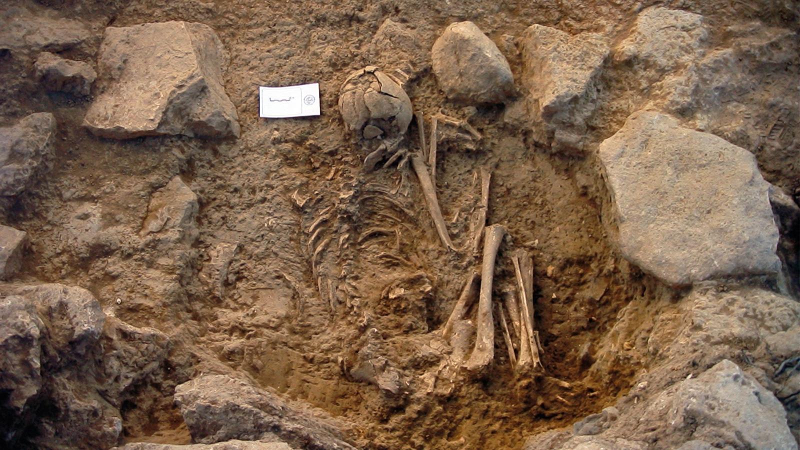 Inhumació individual de l'Edat del Bronze localitzada a la Lloma de Betxí (Paterna, València)