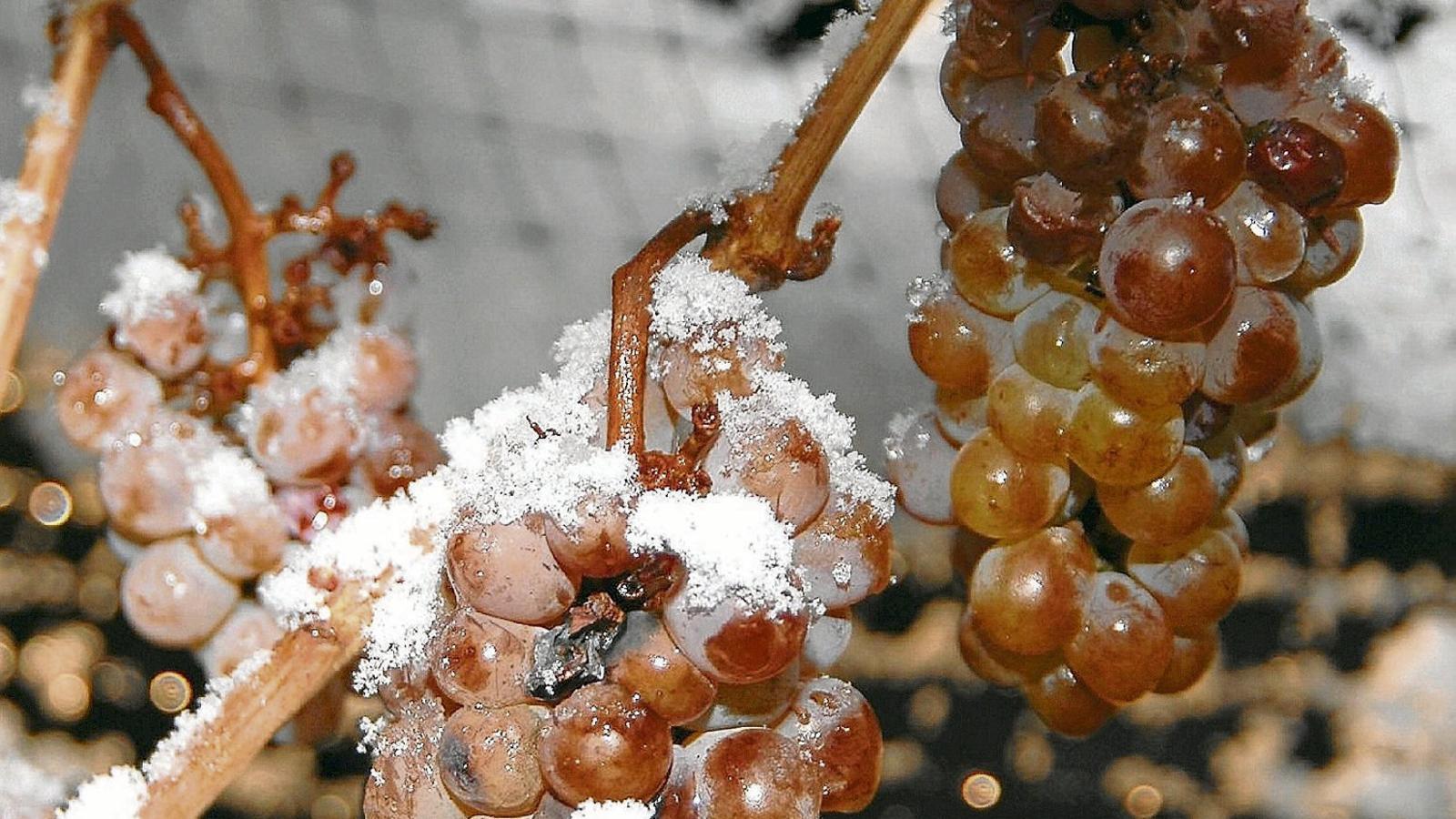 S'acosta l'hivern Vi recomanat Grüner Veltliner Eiswein 2014 Weinrieder (Àustria)