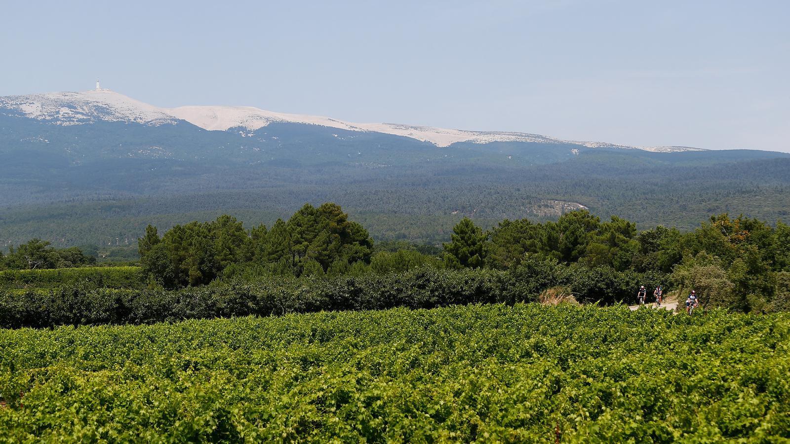 Convertir el vi en gel hidroalcohòlic: una sortida d'emergència per als viticultors francesos