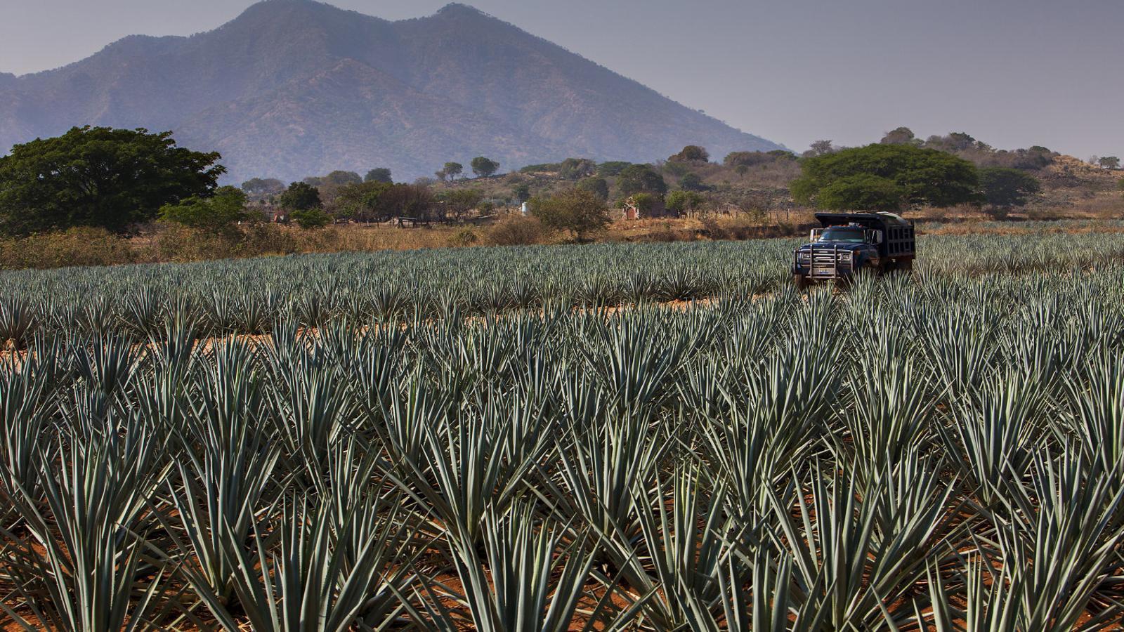 L'orgull de Mèxic La ruta del Tequila
