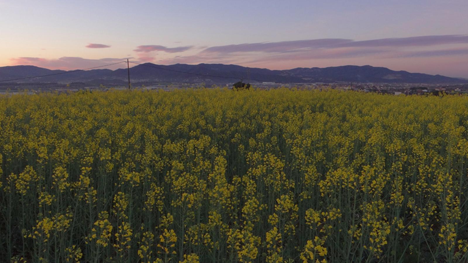 L 39 ambient d 39 hivern es queda en una setmana amb m s canvis - Casas en llica de vall ...