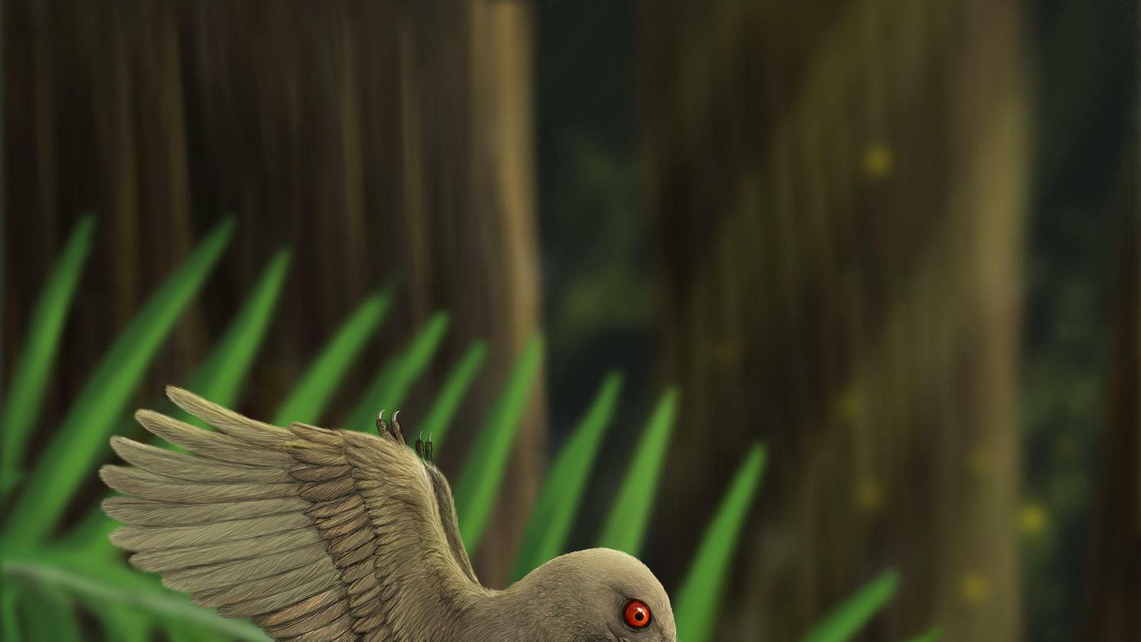 Recreació de com era el petit dinosaure