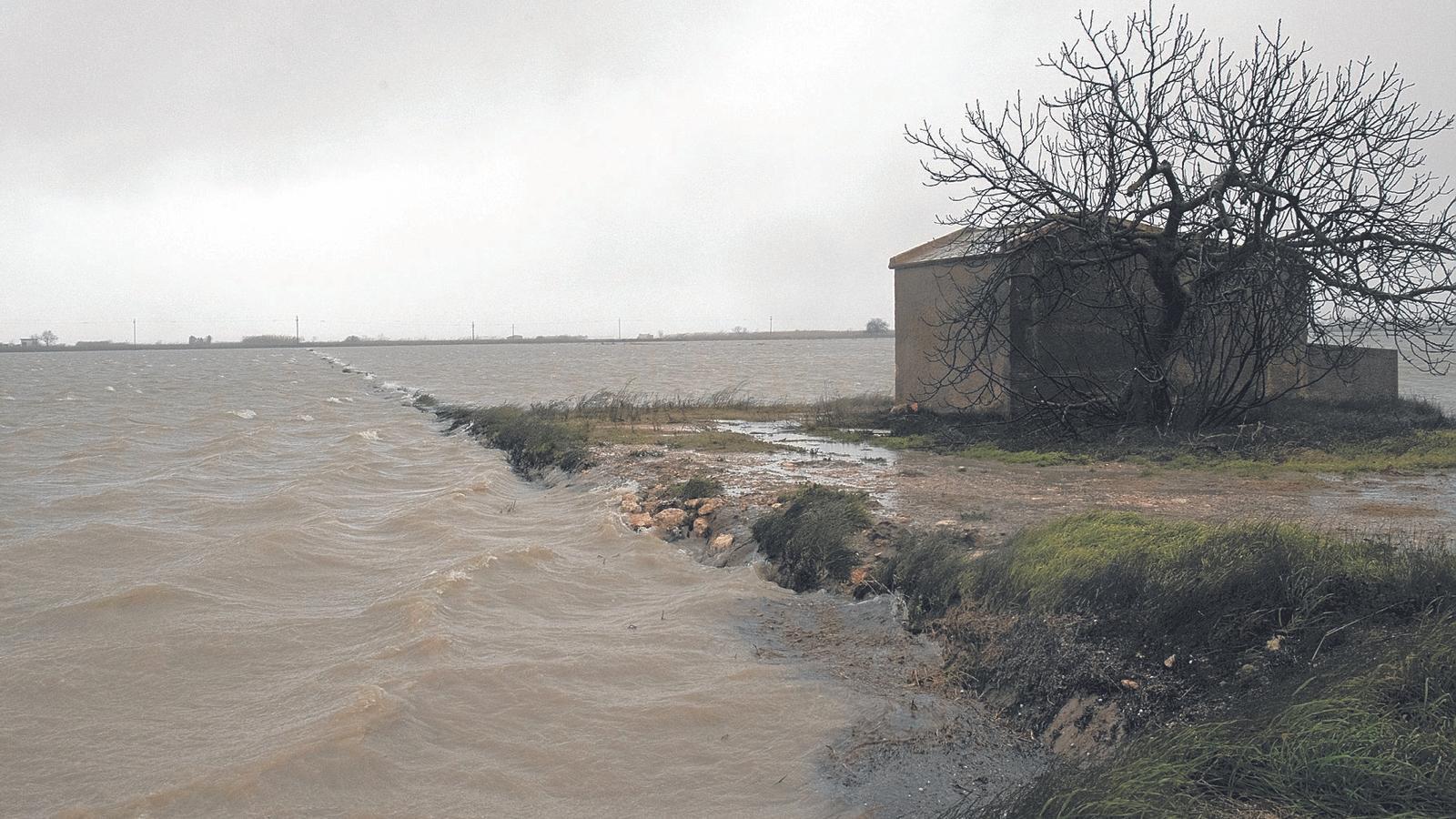 El mars'ha engolit 3.000 hectàrees d'arrossars. A la imatge, un dels camps afectats al Montsià.