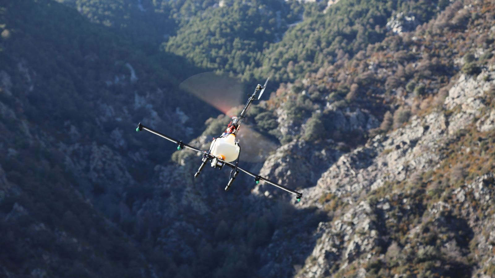 Drons de llarga distància sobrevolen Sant Julià per tractar la processionària