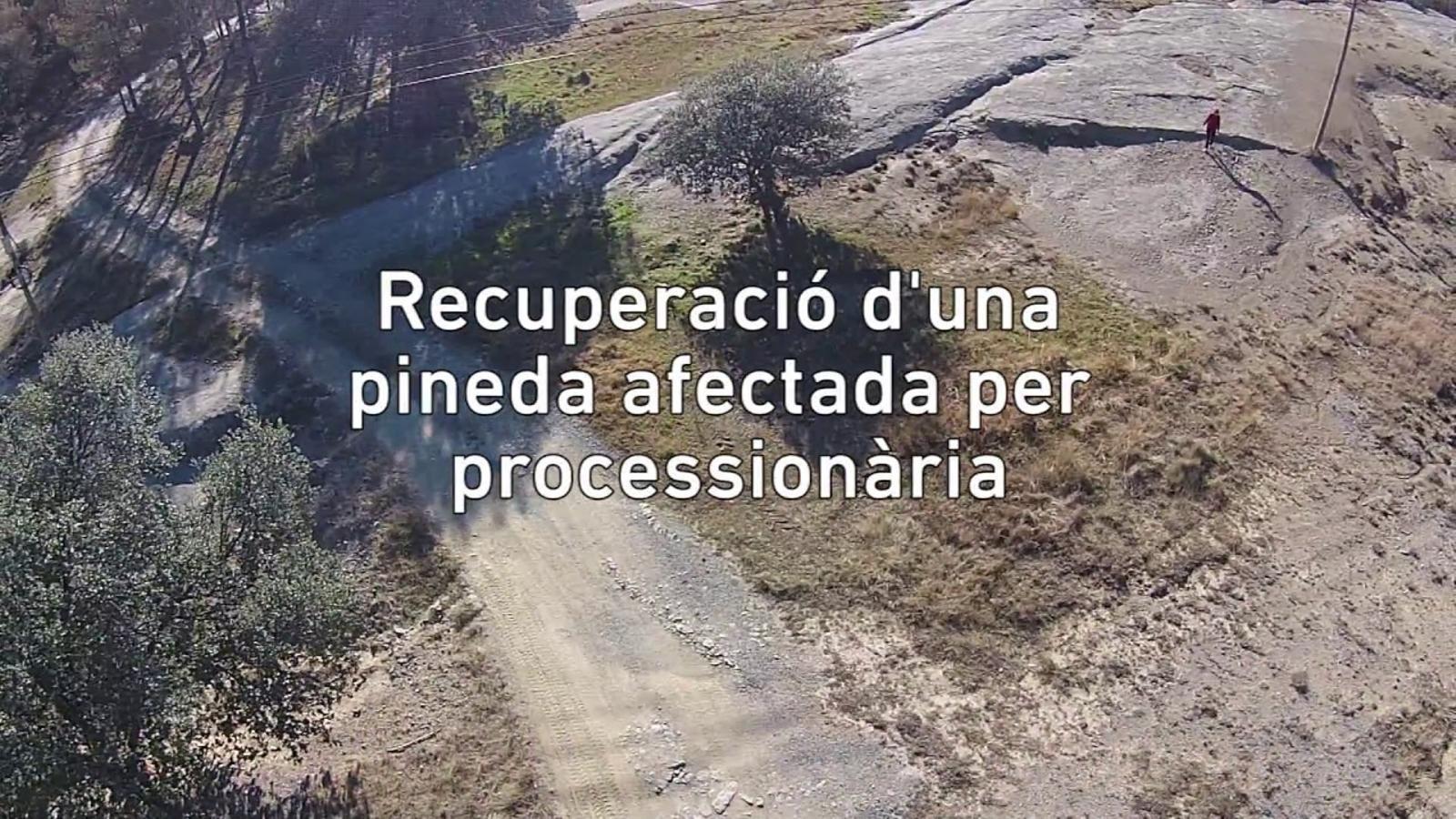 L'abans i el després d'un bosc afectat per processionària a vista de dron