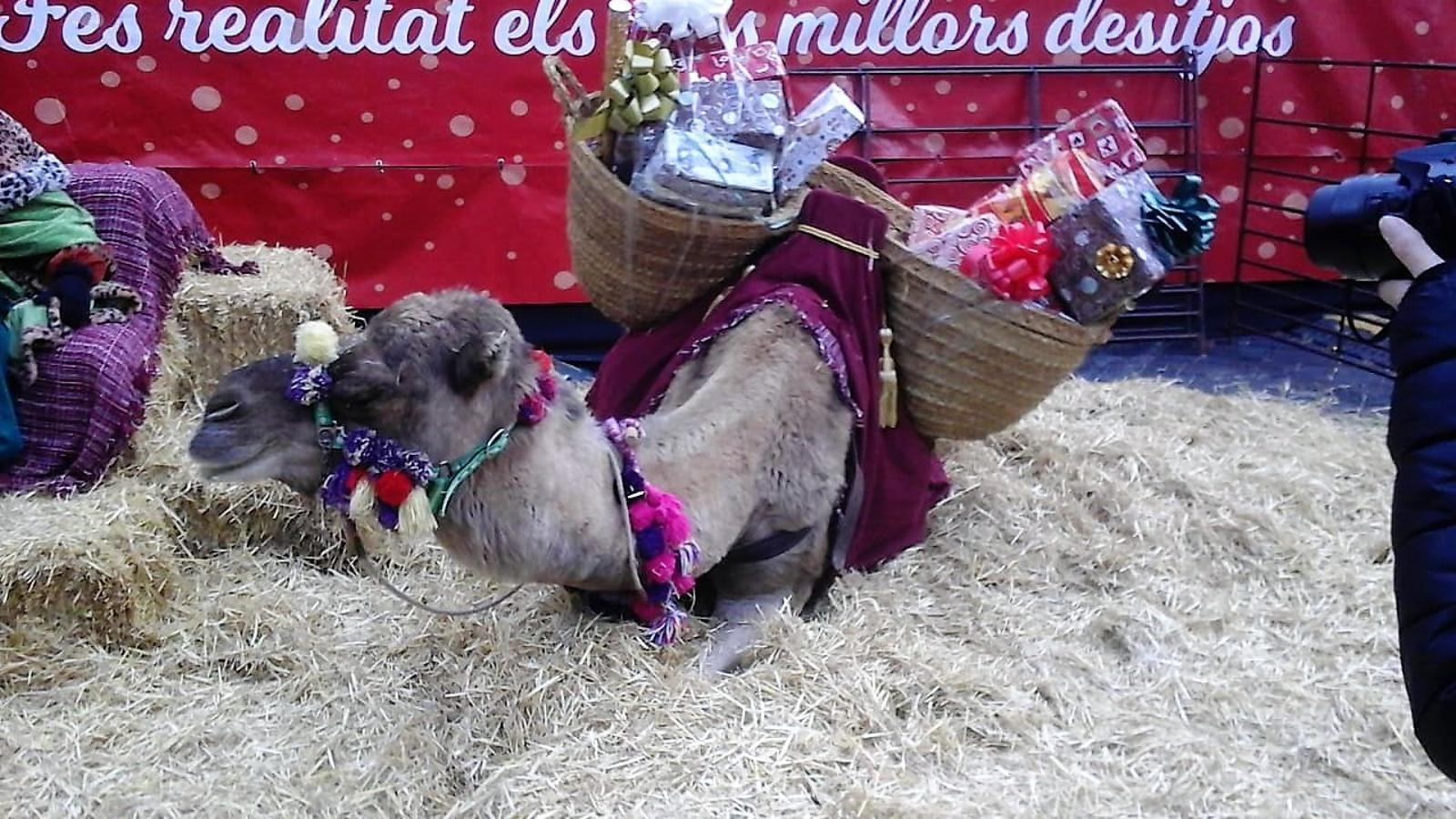 Dromedaris tancats al Poblet de Nadal. / Joves Liberals d'Andorra