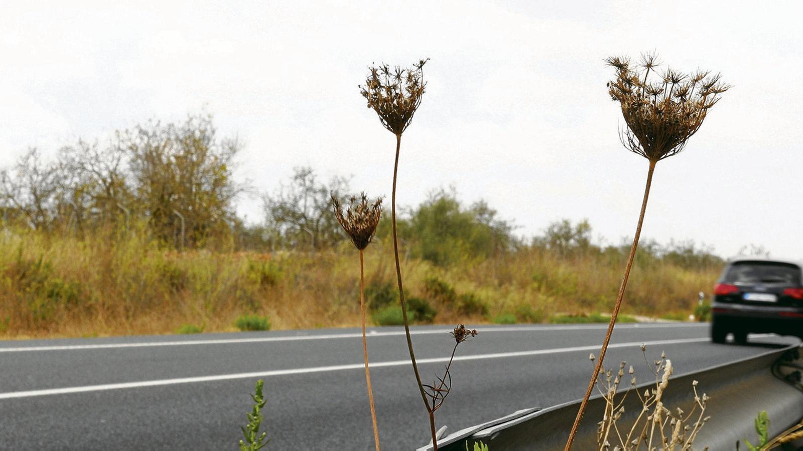 La carretera que es vol transformar en autopista entre  Campos i Llucmajor.