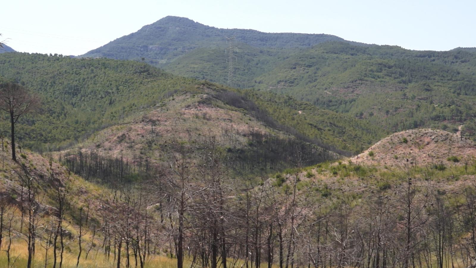 La regeneració vegetal de l'incendi d'Òdena un any després
