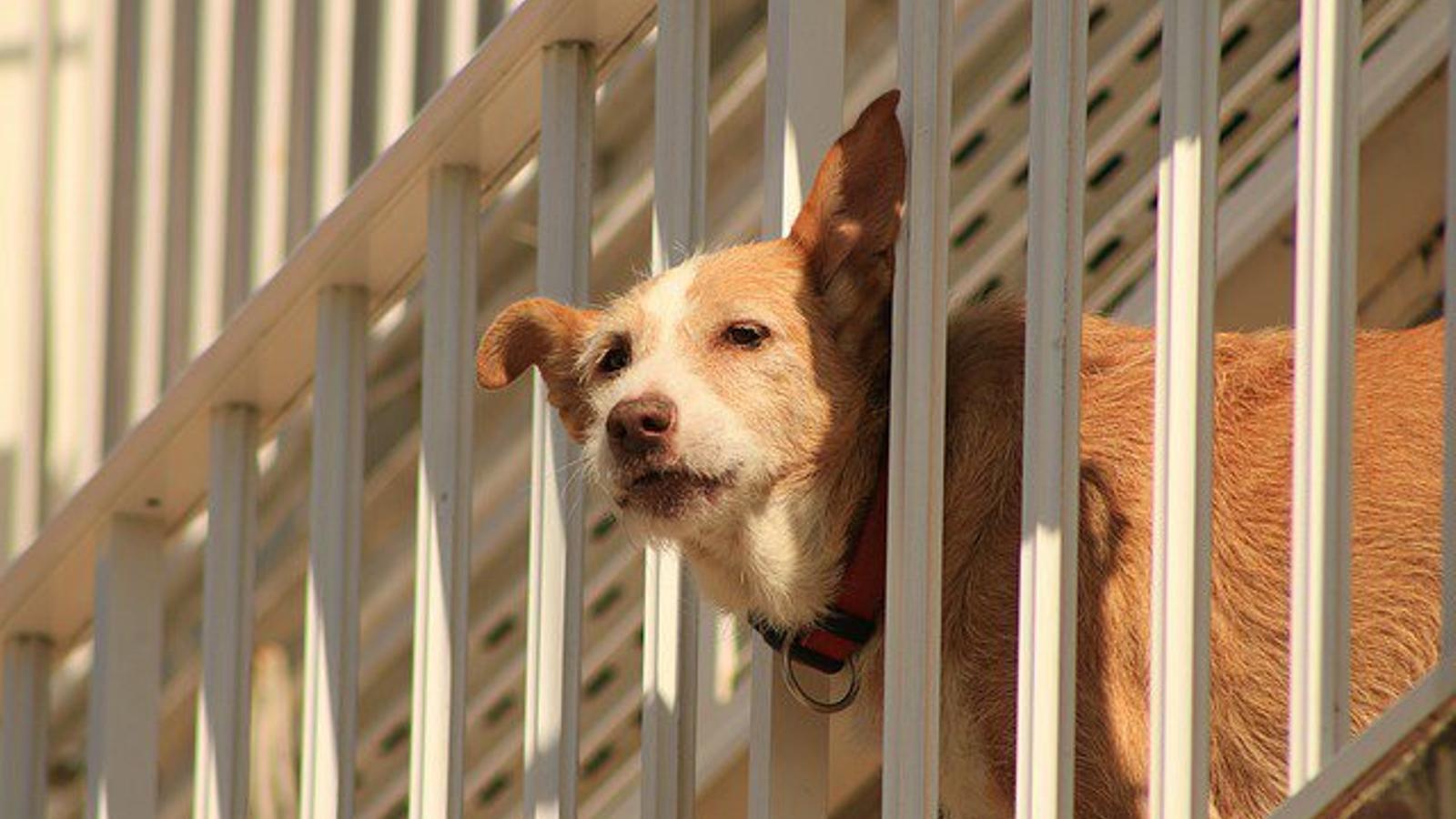 Cort vol limitar a tres els animals domèstics en pisos i duplica totes les sancions