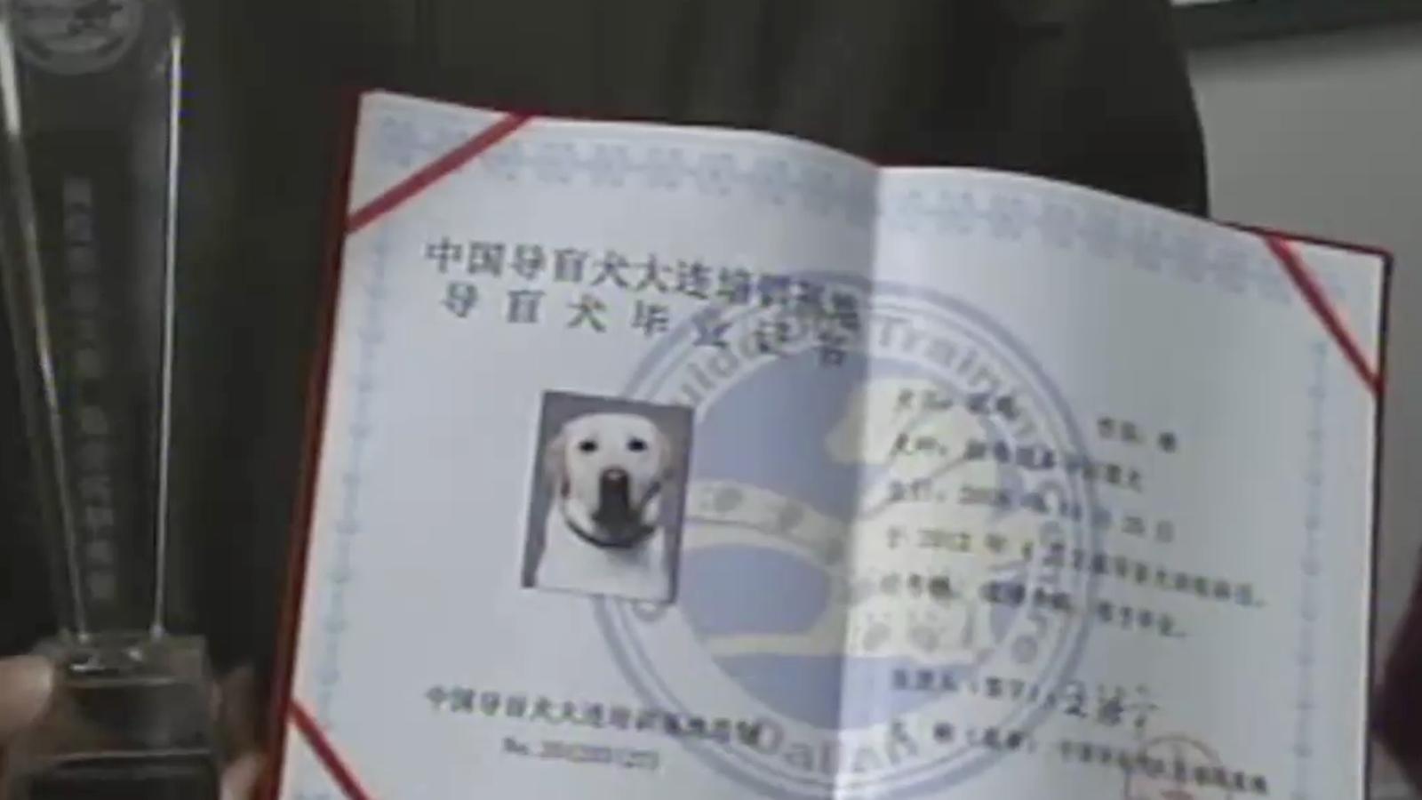 Un centre de la Xina gradua gossos pigall abans que puguin exercir