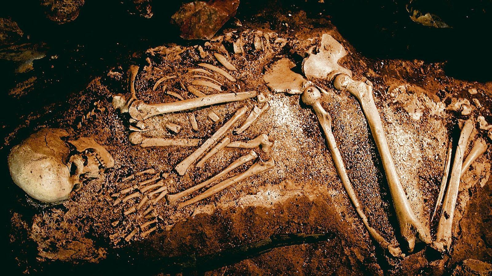 Esquelet d'un neandertal trobat en una excavació.