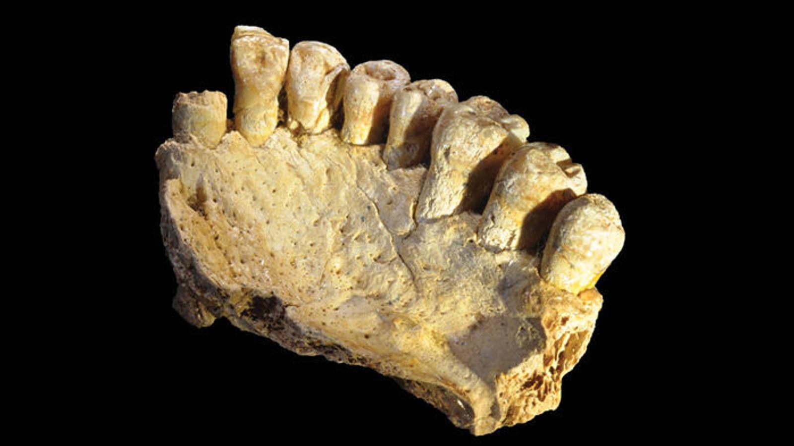 L''Homo sapiens' va sortir de l'Àfrica 60.000 anys abans del que es pensaven els investigadors