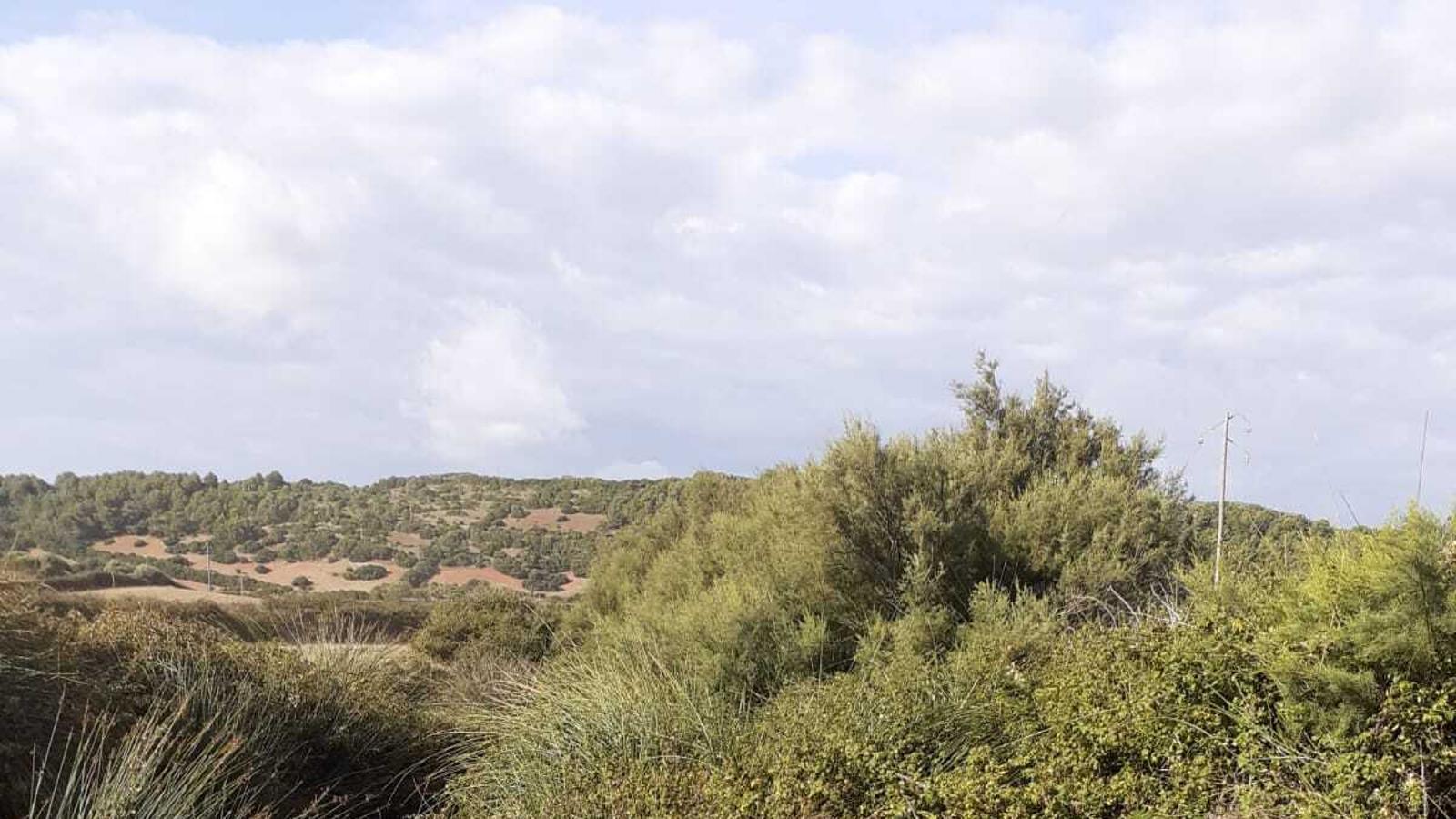 El torrent de Ferreries abans de ser objecte de la intervenció de Medi Ambient.