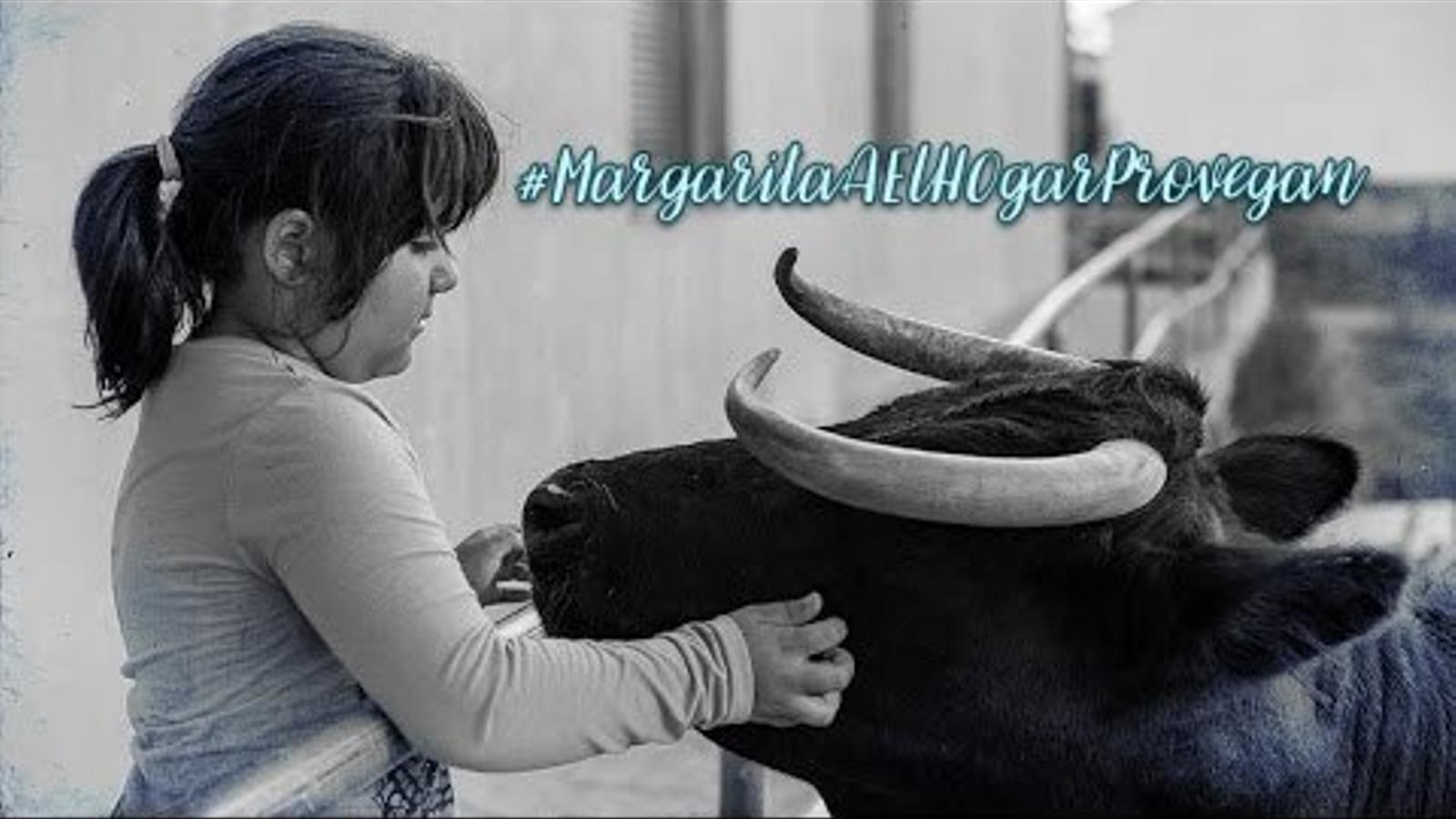 Més de 160.000 firmes per salvar la vaca Margarita