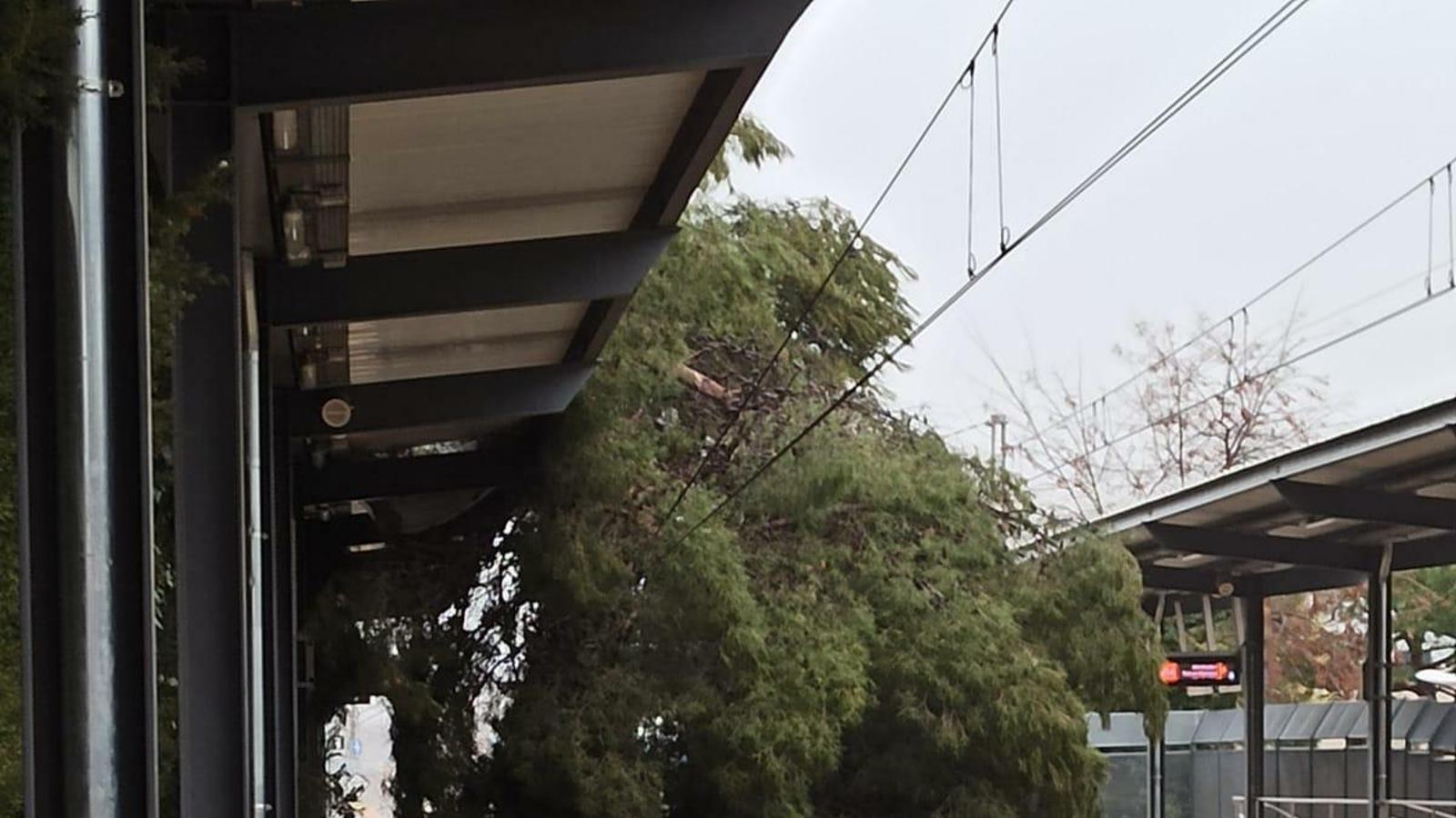 L'arbre va caure a les vies ahir a Sant Joan Despí