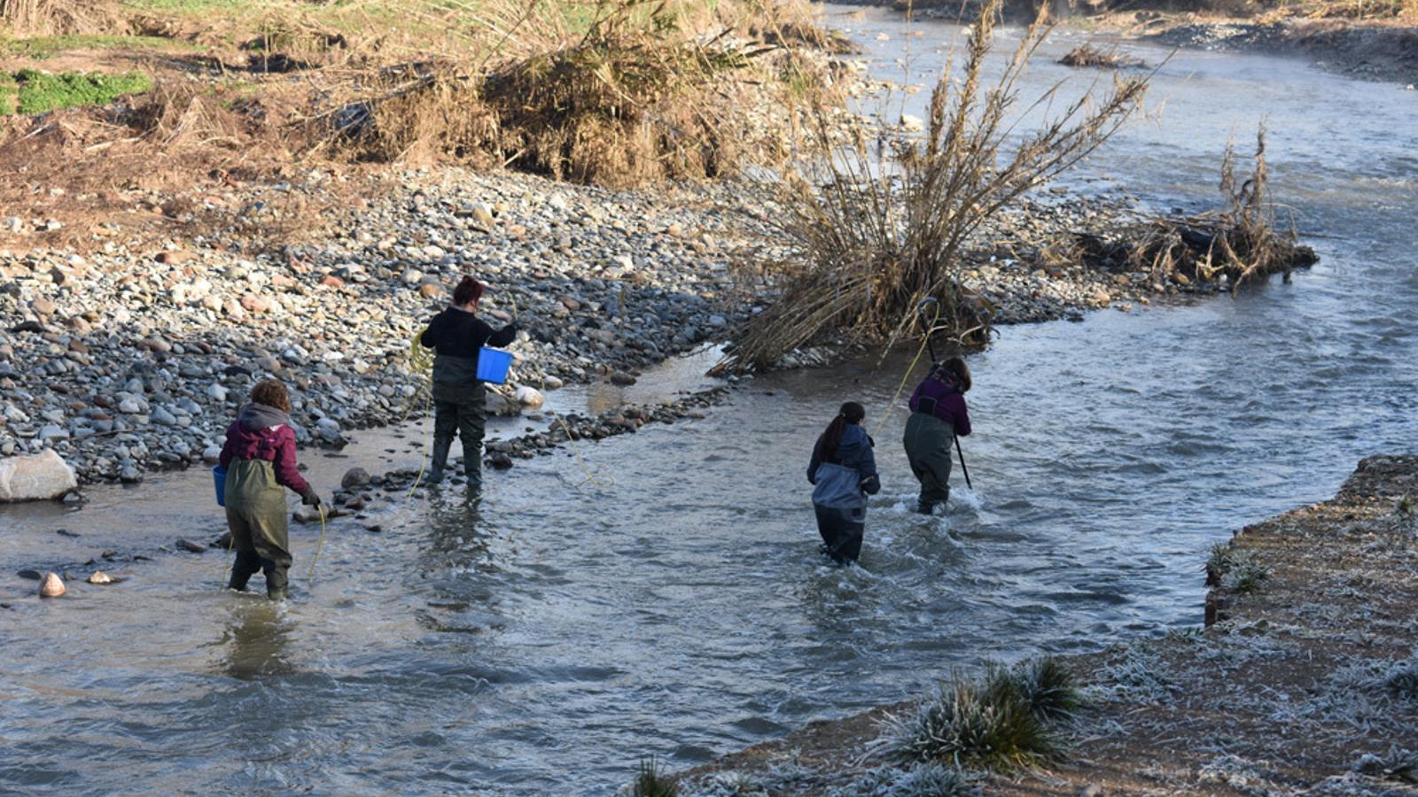 Els treballs de control de la població de peixos del riu Besòs
