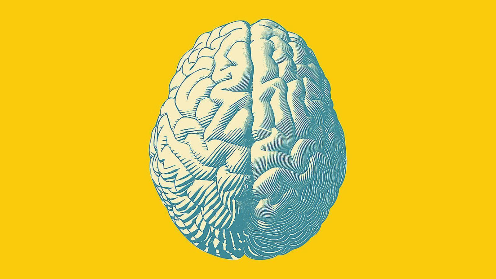 Misteri 3  Com podem tenir una percepció unificada de la realitat? Misteri 1  Què és la consciència? Misteri 4  Per què podem ser conscients  de la nostra consciència? 10 coses  Que encara no sabem  del cervell Misteri 2  ¿Com es decideix quines experiències  fem conscients i quines queden preconscients? Misteri 5  Què fa el cervell quan descansem  o quan badem? Misteri 8¿Com afecten les modificacions epigenètiques el cervell dels nostres fills? Misteri 6  Per què no podem conèixer la realitat tal com és? Misteri 9¿Com computa el cervell totes les dades que gestiona? Misteri 7¿Fins a quin punt la genètica condiciona el nostre comportament? Misteri 10¿Existeix el lliure albir?