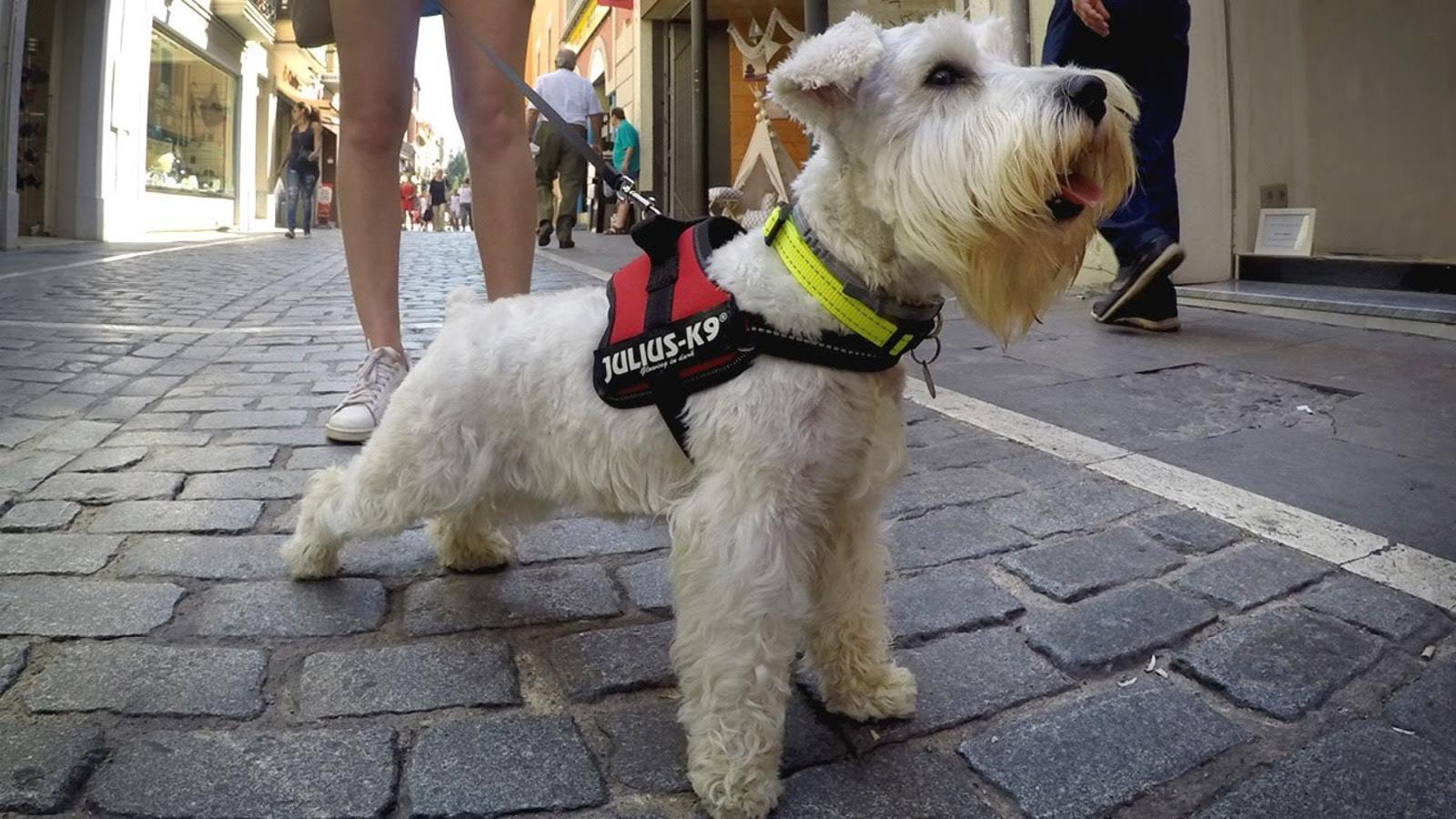 La importància de la socialització dels gossos