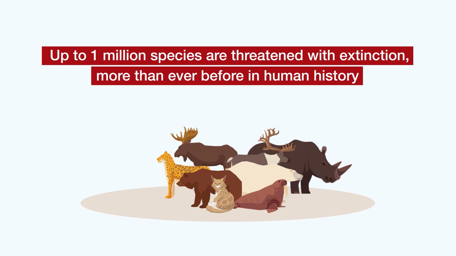 Avaluació Global de la Biodiversitat. Animació de l'IPBES: espècies amenaçades.